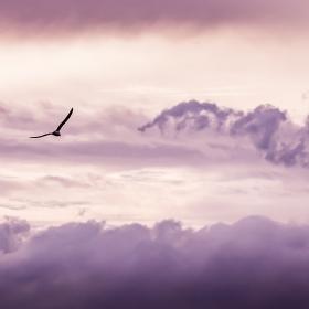 Cielo donde predominan colores violetas, a la izquierda una gaviota volando.